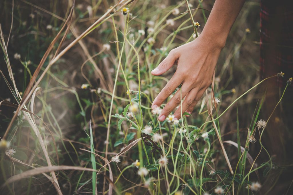 Close up of a woman's hand touching grass in field.